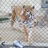 広島市安佐動物公園は中学生まで料金無料でたっぷり遊べるのでおすすめです。