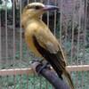 Penyelundupan Burung Langka Kembali Digagalkan