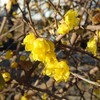 綾瀬川沿いの冬の黄色・色な場所の思い出・黄12…