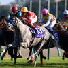 レッドファルクス鞍上C.デムーロ騎手「瞬発力もあり強い馬という印象」/マイルCS共同会見