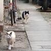 1月22日 西新宿から渋谷区本町まで猫さま歩き とその情景