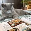 猫あるある。雑誌