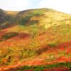 馬の背が赤く染まる 「神の絨毯」は今が見頃!錦秋の栗駒山