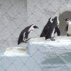1.ペンギンジャンプ 2.ワークショップ2B&H