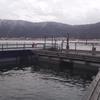 余呉湖でワカサギ釣り 2019.2.14