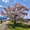 砺波平野を花見サイクリング