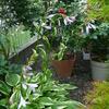 梅雨を彩る植物