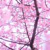 【4月のミッション】