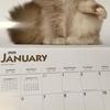 あれ?このカレンダーって?