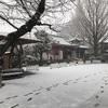 【中野坂上お寺ヨガ】朝ヨガは3月23日に再開します