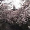[日常]桜