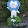 大阪まいしまシーサイドパーク  ネモフィラ祭り!