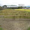 ブログ日数700日目。2018年10月15日、稲の天日干しに行ってきました。