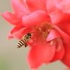 家を出たら急に蜂の巣でブンブン困った。