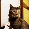 ドクた、のネコ通信