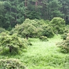 もののけ姫の森のような「しだれ栗キャンプ場」で癒されてきました。