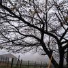 寒いGW八ヶ岳の野ネズミさん&絵画教室