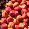 美味しい梅干し作りの最後の仕上げ さぁ、梅を干そう!