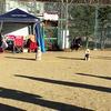 立冬のアリーナツアー 犬の運動会(後半戦-1)