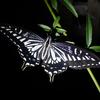 夜眠る虫たち 夜は昼行性の虫に大接近するチャンス