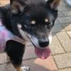 新宿の戸山公園を愛犬のよんくろと散歩♪♪