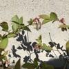 2021.4/22 蕾と花
