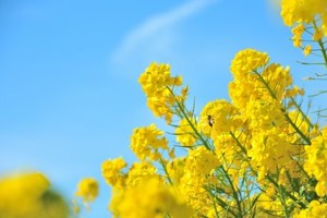 春の彼岸法要には、日蓮正宗で御塔婆建立し、御先祖様、功徳主ともに功徳に浴しましょう。