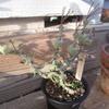 こんな植物育てています。