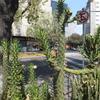 メキシコ日記2014 死者の日②〜メキシコシティ〜UNAM大学~コヨアカン~