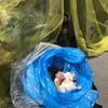 生きた子猫を「可燃ごみ」で捨てる人