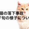 猫の落下事故3月下旬の様子について