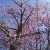 令和二度目の2月24日のエア写真 ⇒三月二日可視化