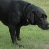 老犬が太った原因と痩せすぎ理由は病気の可能性も!