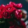 【バラの漬け込み酒】自家製ローズリキュールの作り方と美味しい飲み方を紹介
