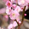 早春の東山動植物園