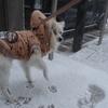 雪かきのお手伝い❆