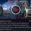 【Netflix】Night on Earth