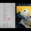 犬のボディランゲージを読む