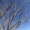 冬の空の青さに気づかない