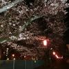 柿生の夜桜