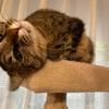 猫に水を飲ませるための5つの工夫とピュアクリスタルの感想と。