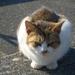 沼津の野良ネコ