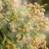 花粉の時期が近いです…!