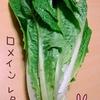 ロメインレタスで炒め物を作るよ【熟女の野菜生活】