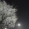 そして夜は更け花は散る