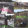 富士山麓鳴沢村で乗馬体験  ホーストレッキング&プチツーリング  🐎