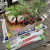 【無職の農業】家庭菜園を始めた無職!作物を育てるスキルを学ぶ!