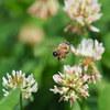 有給取って平日の宮丘公園と発寒川緑地で昆虫撮影
