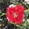 ハワイ8島のお花とカラーをご紹介します。