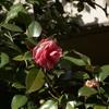 花 冬はこの花ばかり